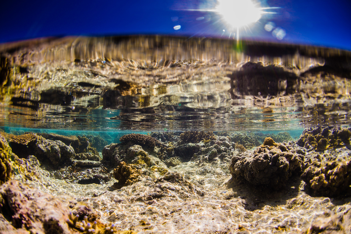 Split level view of the coral reef on Lady Elliot Island, Great Barrier Reef, Queensland, Australia